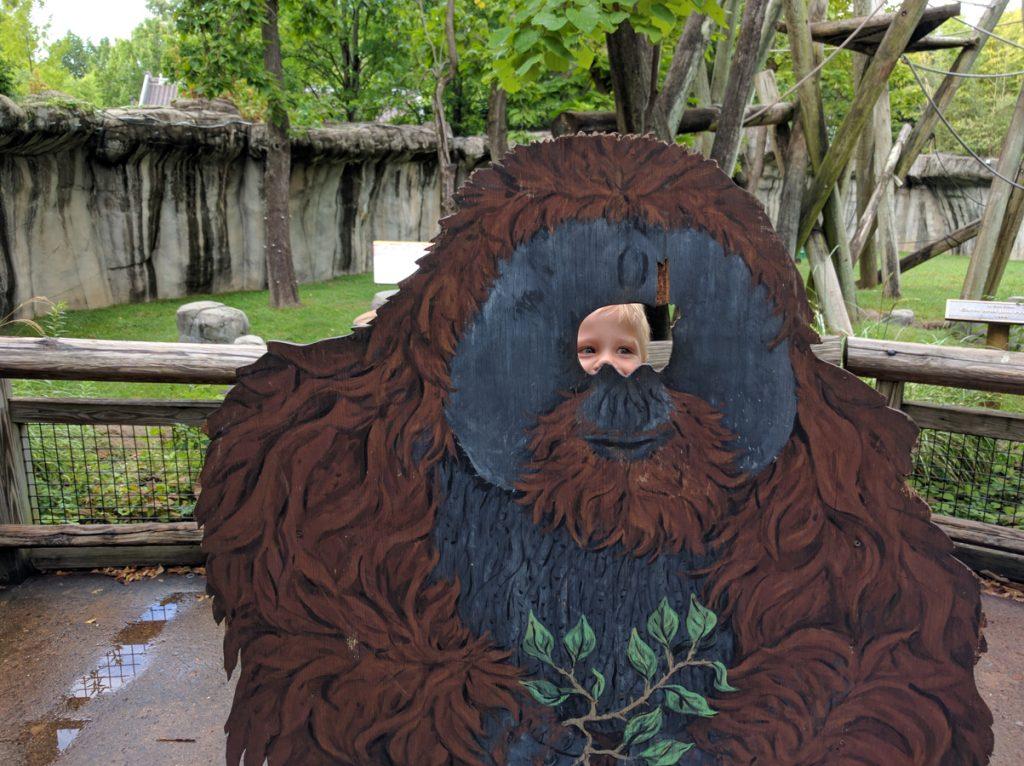 memphis zoo orangutan