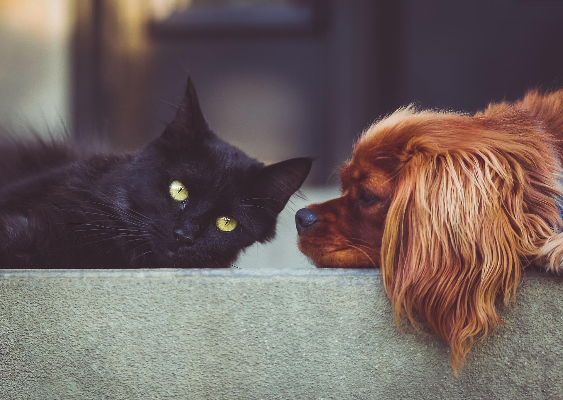 Co to jest pet sitting i jak z niego korzystać?