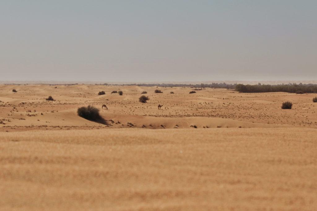 Dubai Desert Conservation Reserve (7)