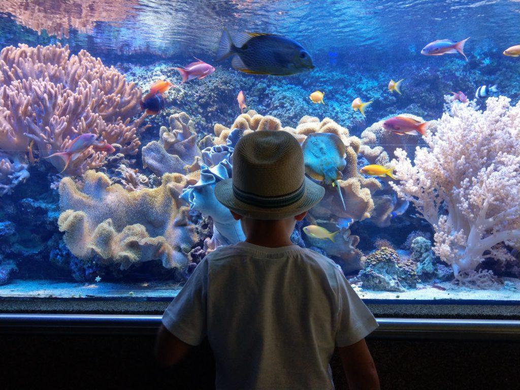 światowy dzień oceanu